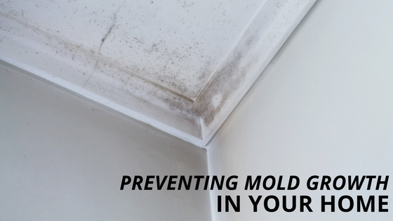 Preventing Mold Growth in Your Home