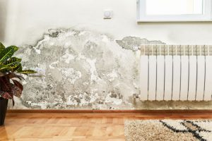 mold on wall of home